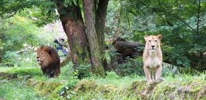 berlin zoo2